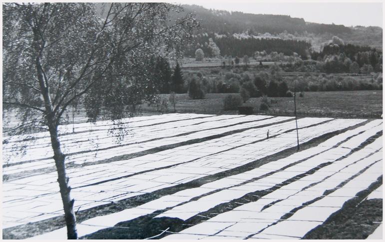 Blanchiment-sur-pré-linge-des-Vosges-terre-textile